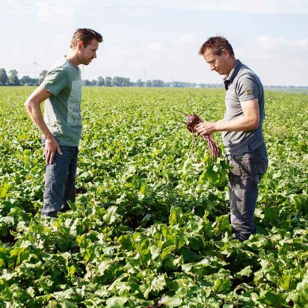Deze boerende broers werken samen aan kringlooplandbouw