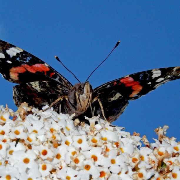 4 tips voor een vlindervriendelijke tuin vol biodiversiteit