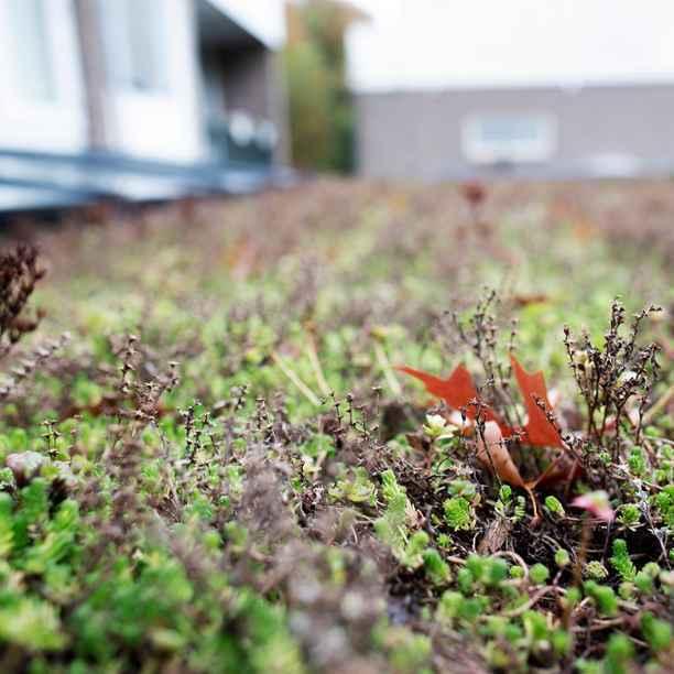 8 tips om je huis in 2021 betaalbaar(der) te verduurzamen
